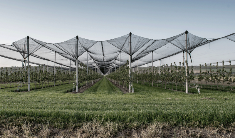 Protect and safeguard vineyards and orchards with Cablesteel products